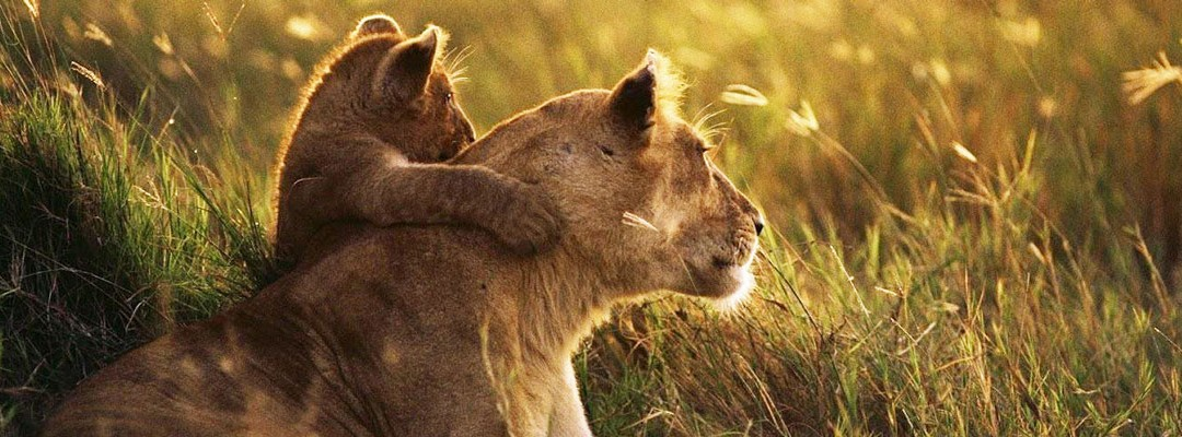 lioness-and-cub