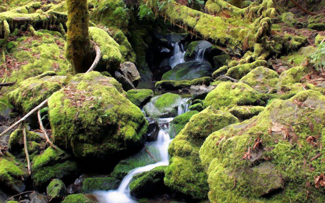I suoni rilassanti della natura
